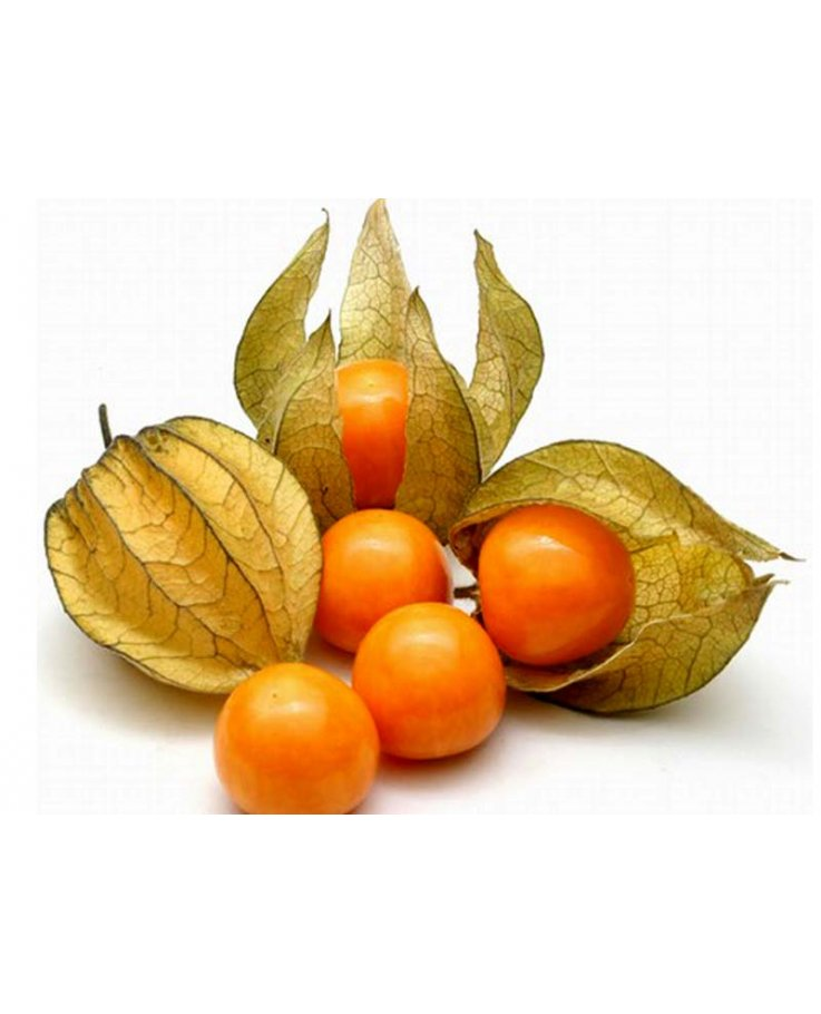 Alchechengi Frutti