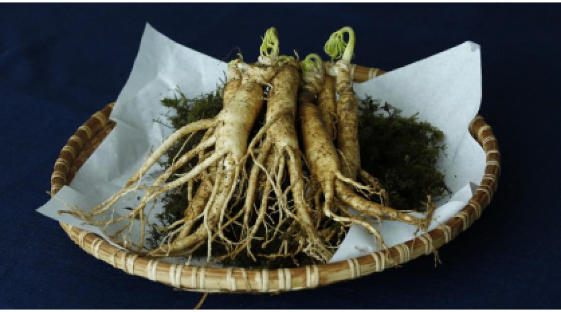 Ginseng: usi, benefici e controindicazioni