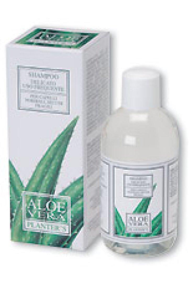 Planters Aloe Sh Frequente